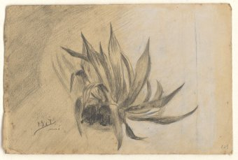 Untitled (Agave)