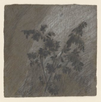 Untitled (Study of branch with leaves)