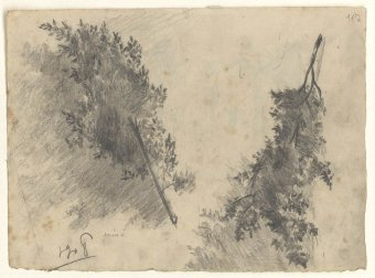 Untitled (Study of branches with leaves)